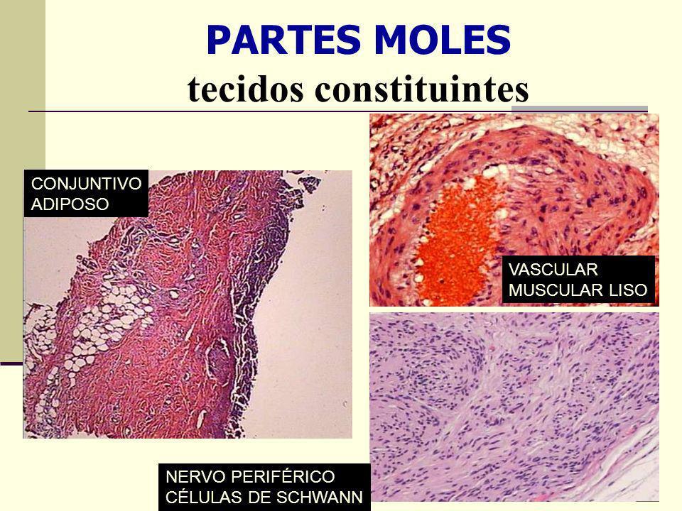 PARTES MOLES tecidos constituintes NERVO PERIFÉRICO CÉLULAS DE SCHWANN CONJUNTIVO ADIPOSO VASCULAR MUSCULAR LISO