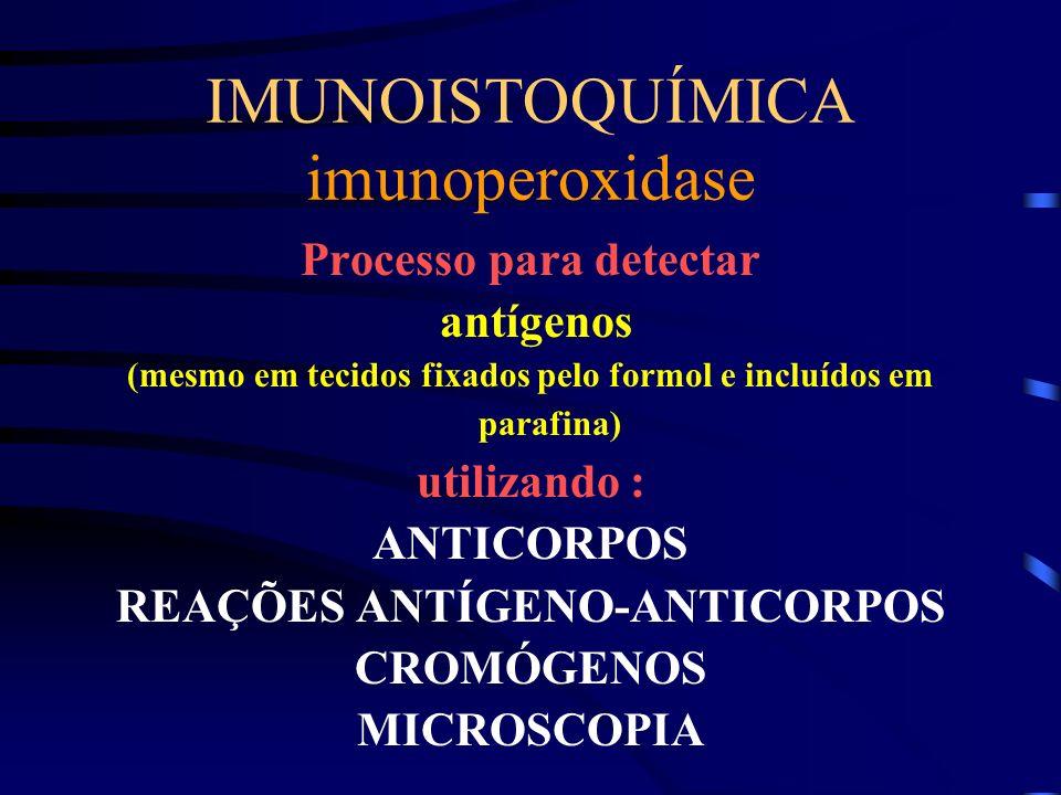 IMUNOISTOQUÍMICA imunoperoxidase Processo para detectar antígenos (mesmo em tecidos fixados pelo formol e incluídos em parafina) utilizando : ANTICORP