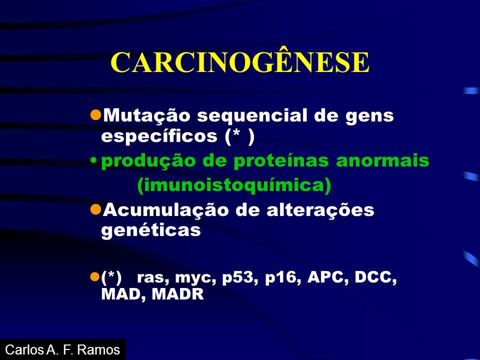 CARCINOGÊNESE lMutação sequencial de gens específicos (* ) produção de proteínas anormais (imunoistoquímica) lAcumulação de alterações genéticas l(*)r