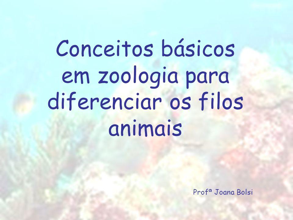 Conceitos básicos em zoologia para diferenciar os filos animais Profª Joana Bolsi