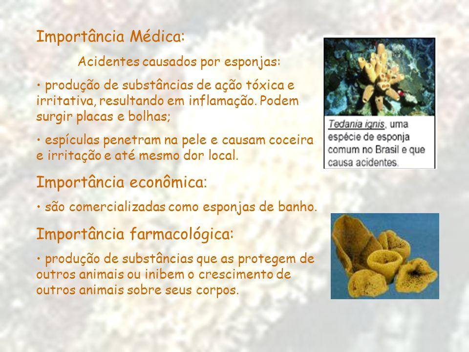 Importância Médica: Acidentes causados por esponjas: produção de substâncias de ação tóxica e irritativa, resultando em inflamação. Podem surgir placa