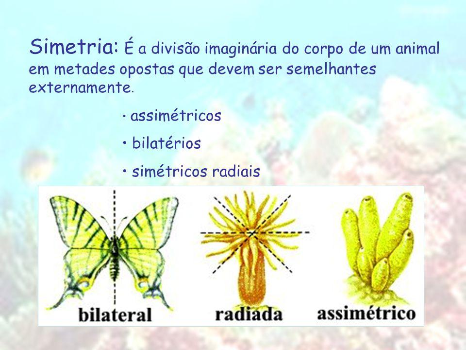 Simetria: É a divisão imaginária do corpo de um animal em metades opostas que devem ser semelhantes externamente. assimétricos bilatérios simétricos r