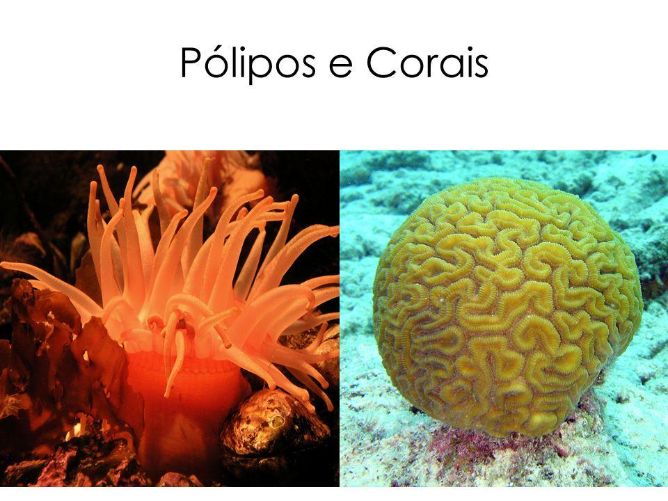 Pólipos e Corais