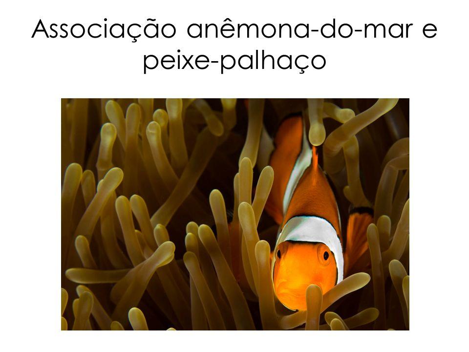 Associação anêmona-do-mar e peixe-palhaço