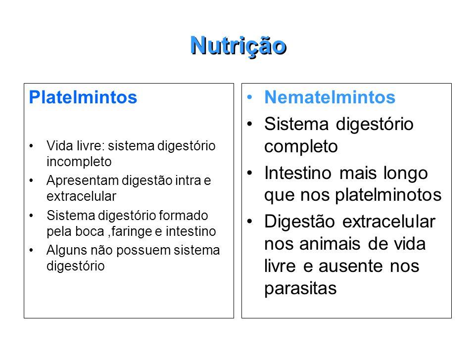 Nutrição Platelmintos Vida livre: sistema digestório incompleto Apresentam digestão intra e extracelular Sistema digestório formado pela boca,faringe