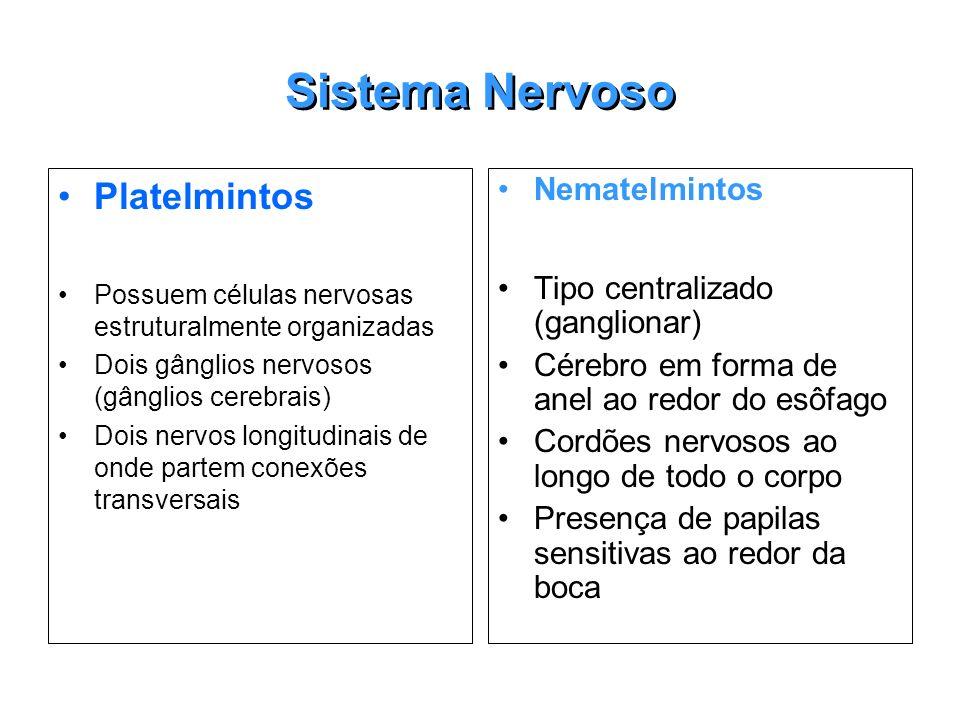 Sistema Nervoso Platelmintos Possuem células nervosas estruturalmente organizadas Dois gânglios nervosos (gânglios cerebrais) Dois nervos longitudinai