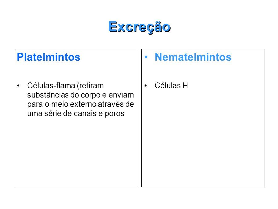 Excreção Platelmintos Células-flama (retiram substâncias do corpo e enviam para o meio externo através de uma série de canais e poros Nematelmintos Cé