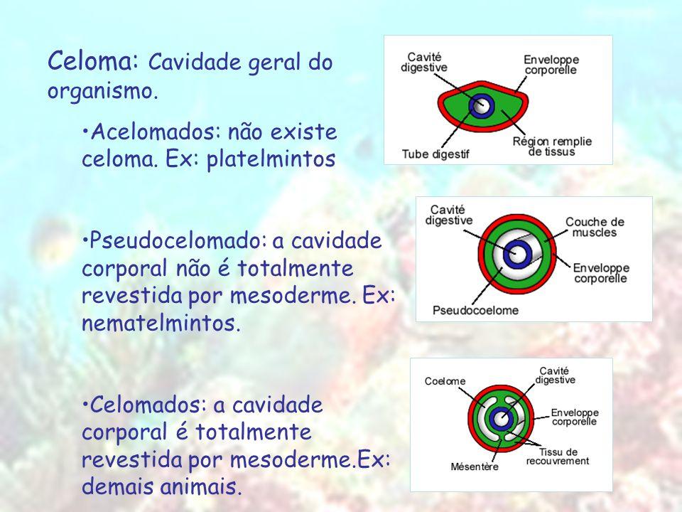Celoma: Cavidade geral do organismo. Acelomados: não existe celoma. Ex: platelmintos Pseudocelomado: a cavidade corporal não é totalmente revestida po