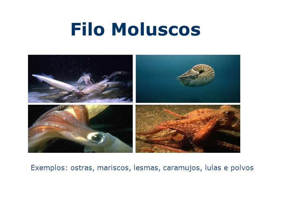 Filo Moluscos Exemplos: ostras, mariscos, lesmas, caramujos, lulas e polvos
