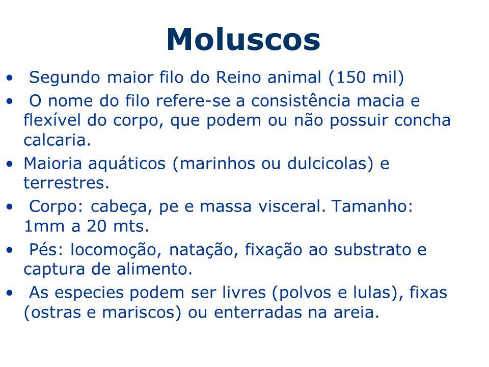 Moluscos Segundo maior filo do Reino animal (150 mil) O nome do filo refere-se a consistência macia e flexível do corpo, que podem ou não possuir conc