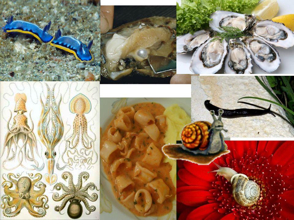 Nudibranquios (lesmas-do- mar): sem concha
