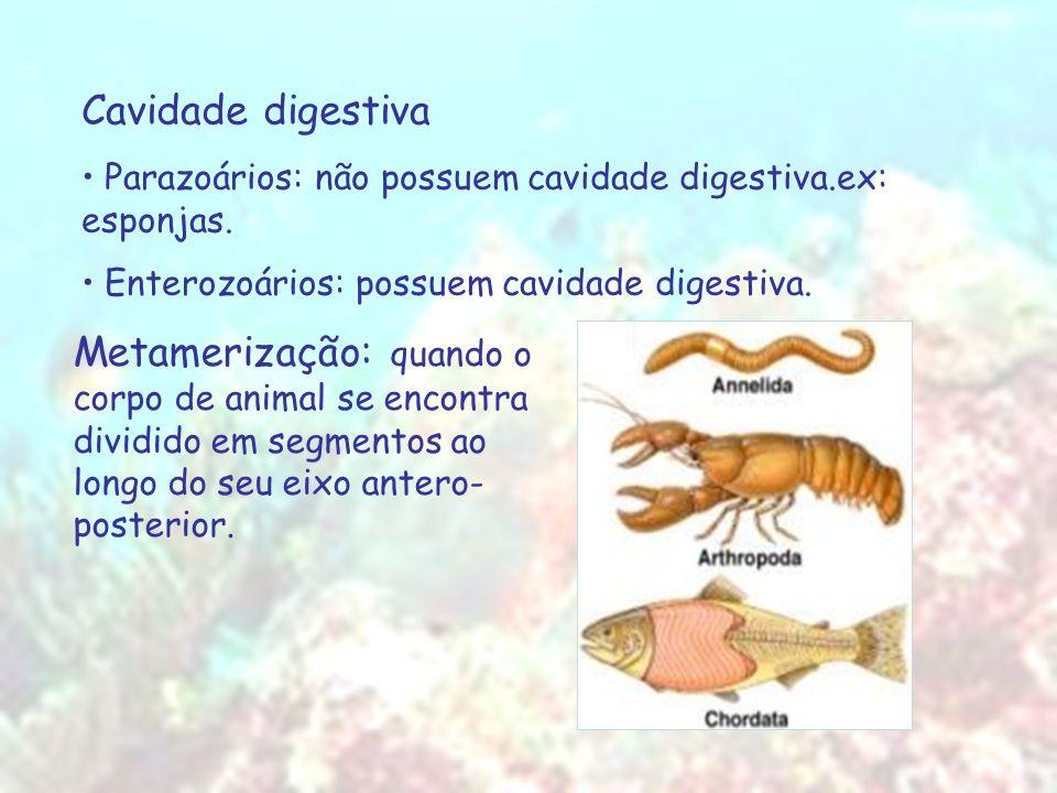 Cavidade digestiva Parazoários: não possuem cavidade digestiva.ex: esponjas. Enterozoários: possuem cavidade digestiva. Metamerização: quando o corpo