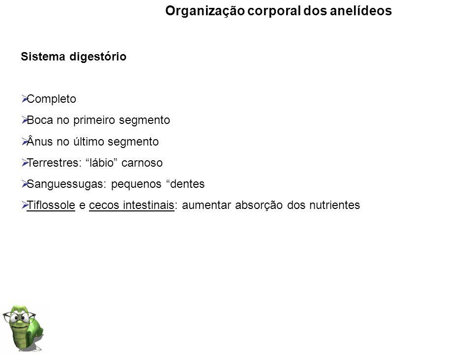 Organização corporal dos anelídeos Sistema digestório Completo Boca no primeiro segmento Ânus no último segmento Terrestres: lábio carnoso Sanguessuga