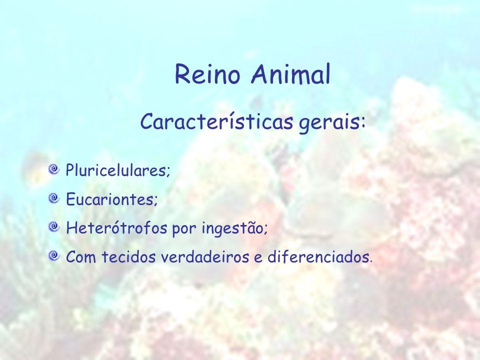 Reino Animal Características gerais: Pluricelulares; Eucariontes; Heterótrofos por ingestão; Com tecidos verdadeiros e diferenciados.