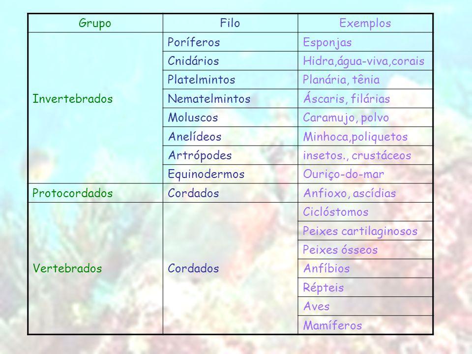 GrupoFiloExemplos PoríferosEsponjas CnidáriosHidra,água-viva,corais PlatelmintosPlanária, tênia InvertebradosNematelmintosÁscaris, filárias MoluscosCa