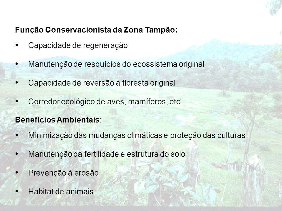Função Conservacionista da Zona Tampão: Capacidade de regeneração Manutenção de resquícios do ecossistema original Capacidade de reversão à floresta o