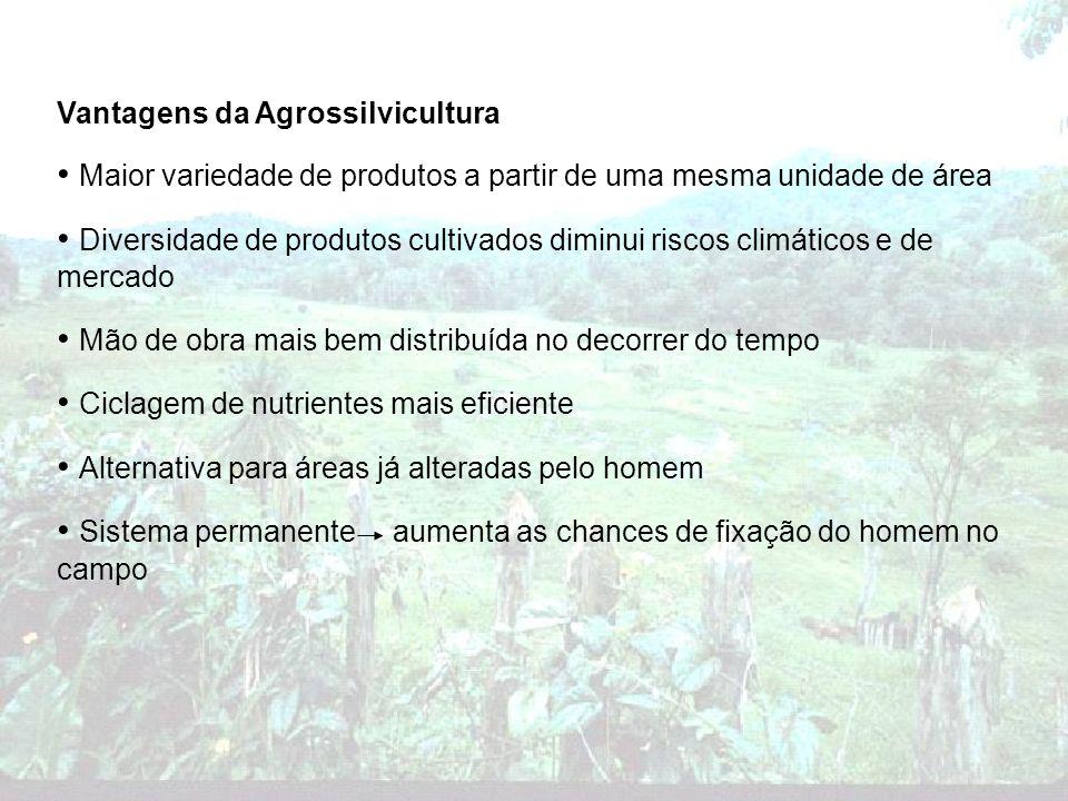 Vantagens da Agrossilvicultura Maior variedade de produtos a partir de uma mesma unidade de área Diversidade de produtos cultivados diminui riscos cli