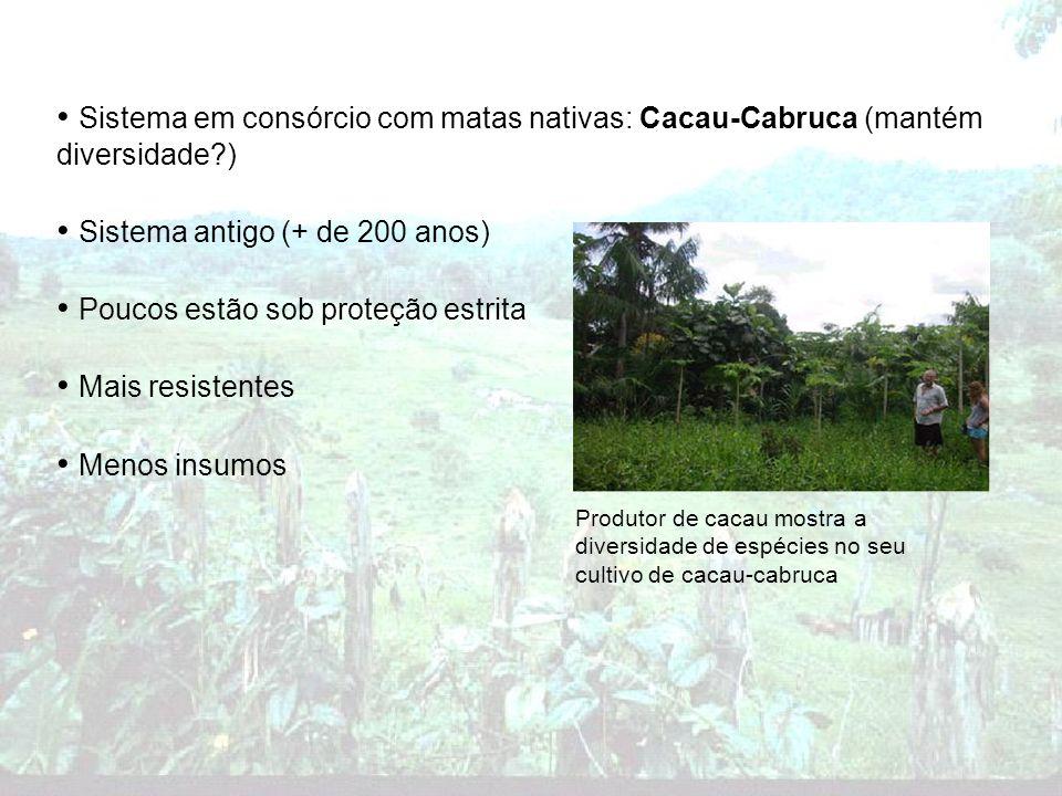 Sistema em consórcio com matas nativas: Cacau-Cabruca (mantém diversidade?) Sistema antigo (+ de 200 anos) Poucos estão sob proteção estrita Mais resi