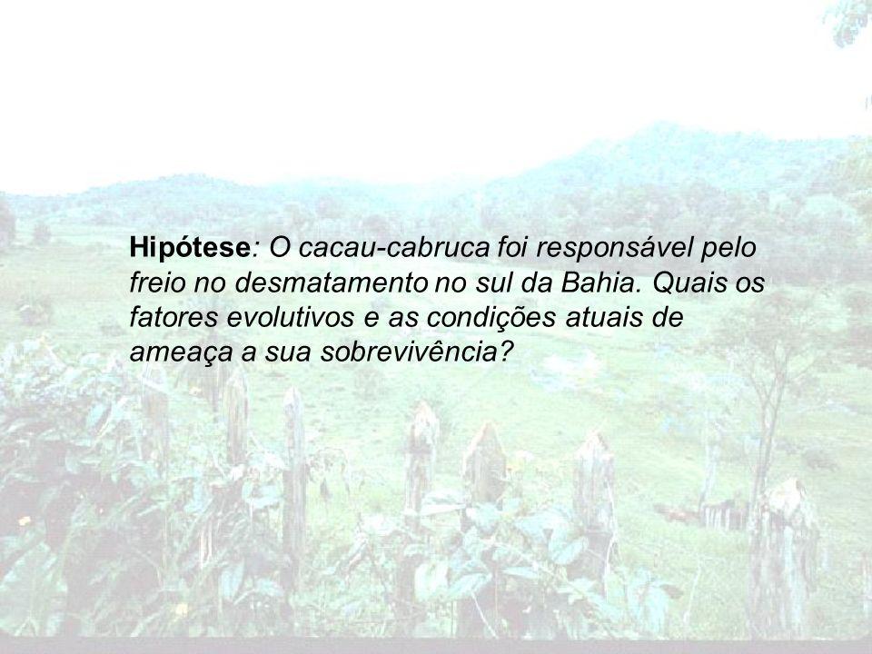 Hipótese: O cacau-cabruca foi responsável pelo freio no desmatamento no sul da Bahia. Quais os fatores evolutivos e as condições atuais de ameaça a su