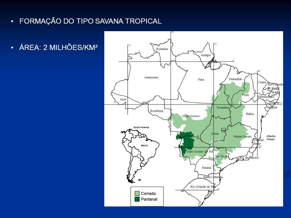 FORMAÇÃO DO TIPO SAVANA TROPICAL ÁREA: 2 MILHÕES/KM²
