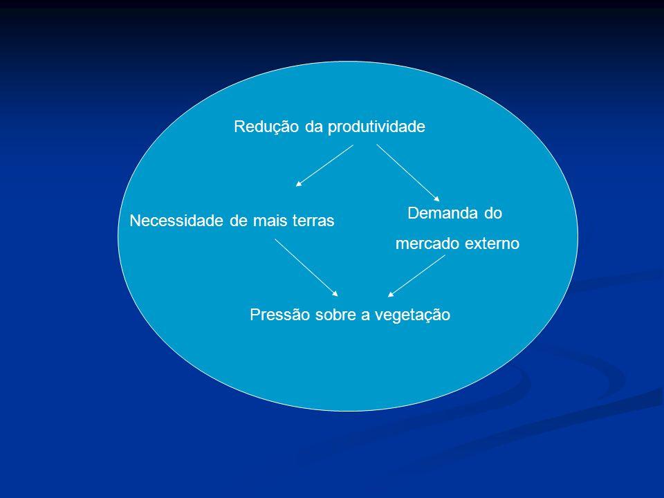 Redução da produtividade Necessidade de mais terras Pressão sobre a vegetação Demanda do mercado externo