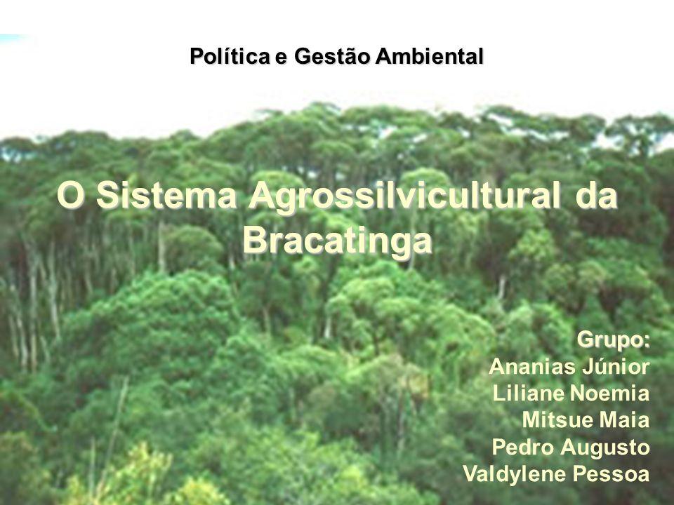 O Sistema Agrossilvicultural da Bracatinga Política e Gestão Ambiental Grupo: Ananias Júnior Liliane Noemia Mitsue Maia Pedro Augusto Valdylene Pessoa