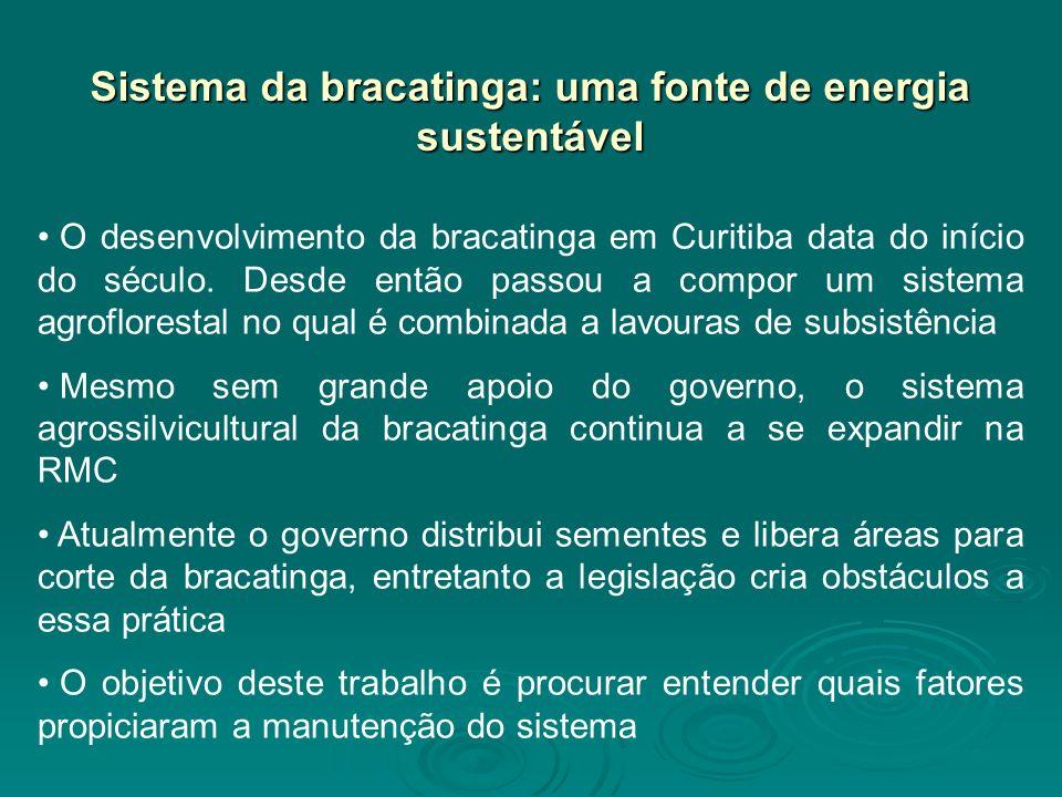O desenvolvimento da bracatinga em Curitiba data do início do século. Desde então passou a compor um sistema agroflorestal no qual é combinada a lavou