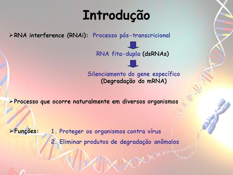Introdução RNA interference (RNAi): Processo pós-transcricional RNA fita-dupla (dsRNAs) Silenciamento do gene específico (Degradação do mRNA) Processo
