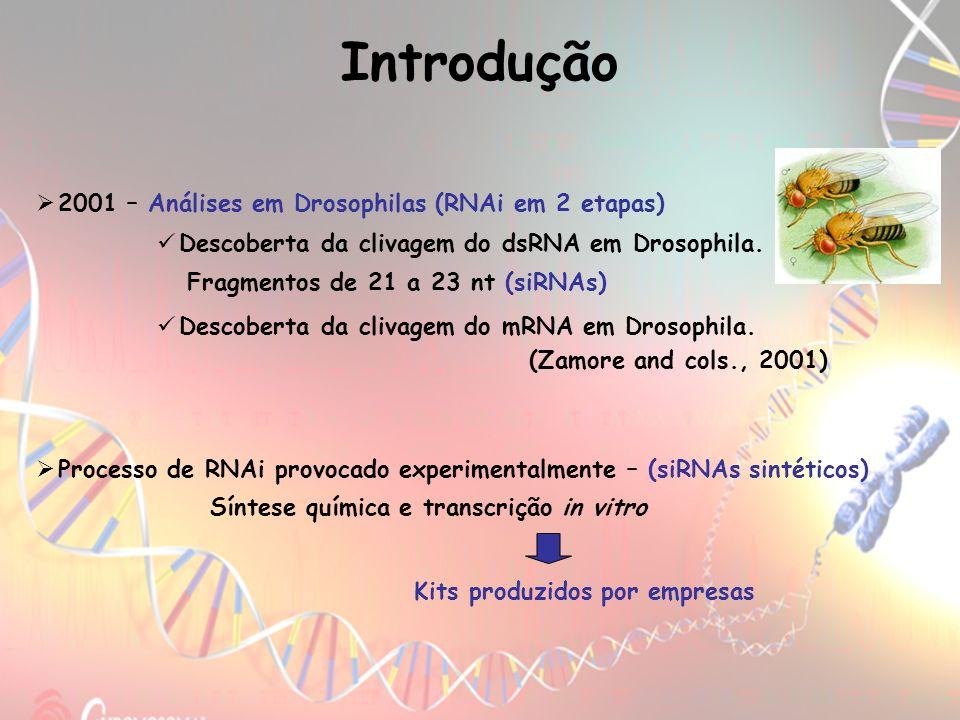 2001 – Análises em Drosophilas (RNAi em 2 etapas) Descoberta da clivagem do mRNA em Drosophila. (Zamore and cols., 2001) Descoberta da clivagem do dsR