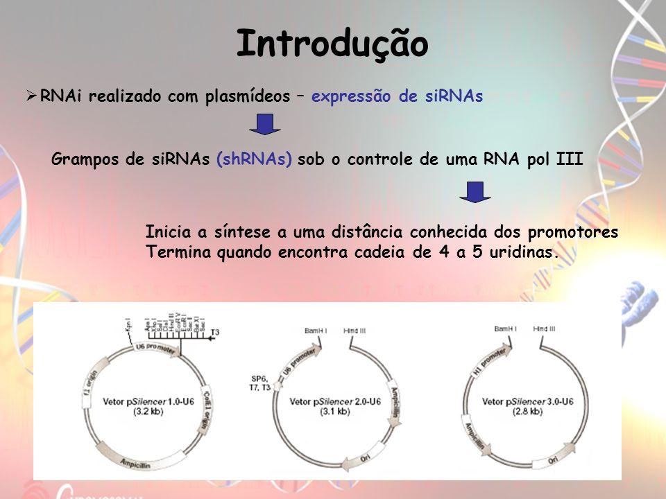 RNAi realizado com plasmídeos – expressão de siRNAs Grampos de siRNAs (shRNAs) sob o controle de uma RNA pol III Introdução Inicia a síntese a uma dis