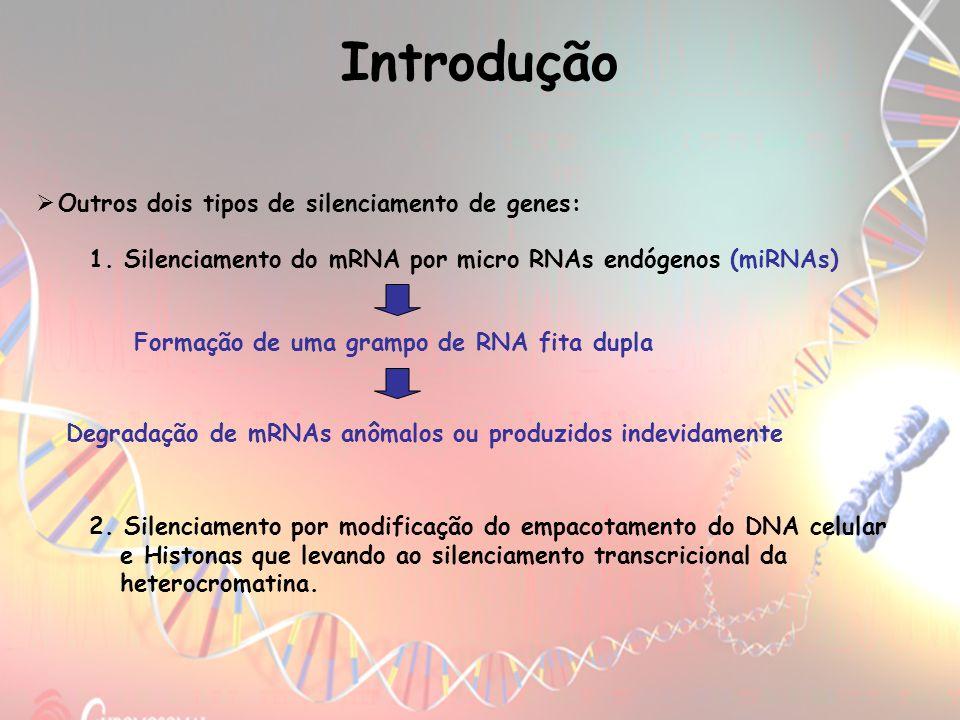 Outros dois tipos de silenciamento de genes: 1. Silenciamento do mRNA por micro RNAs endógenos (miRNAs) Formação de uma grampo de RNA fita dupla 2. Si