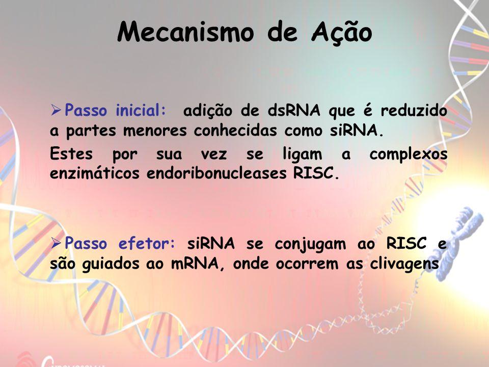 Passo inicial: adição de dsRNA que é reduzido a partes menores conhecidas como siRNA. Estes por sua vez se ligam a complexos enzimáticos endoribonucle