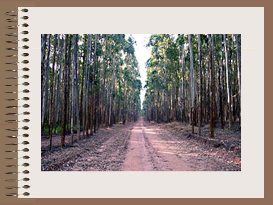 Reflorestamento Homogêneo Ambiental Biodiversidade Empobrecimento do solo Desertificação Espécies exóticas Social Emprego Latifúndio