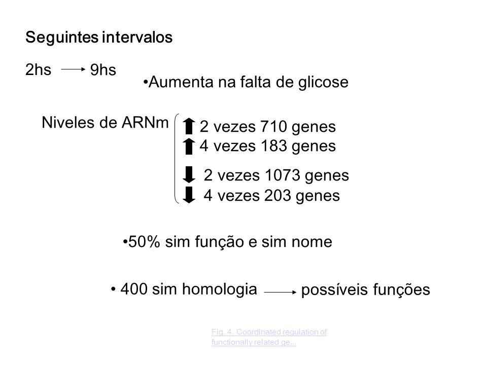 400 sim homologia 2hs Aumenta na falta de glicose Niveles de ARNm 2 vezes 710 genes 4 vezes 183 genes 2 vezes 1073 genes 9hs 4 vezes 203 genes 50% sim função e sim nome possíveis funções Fig.
