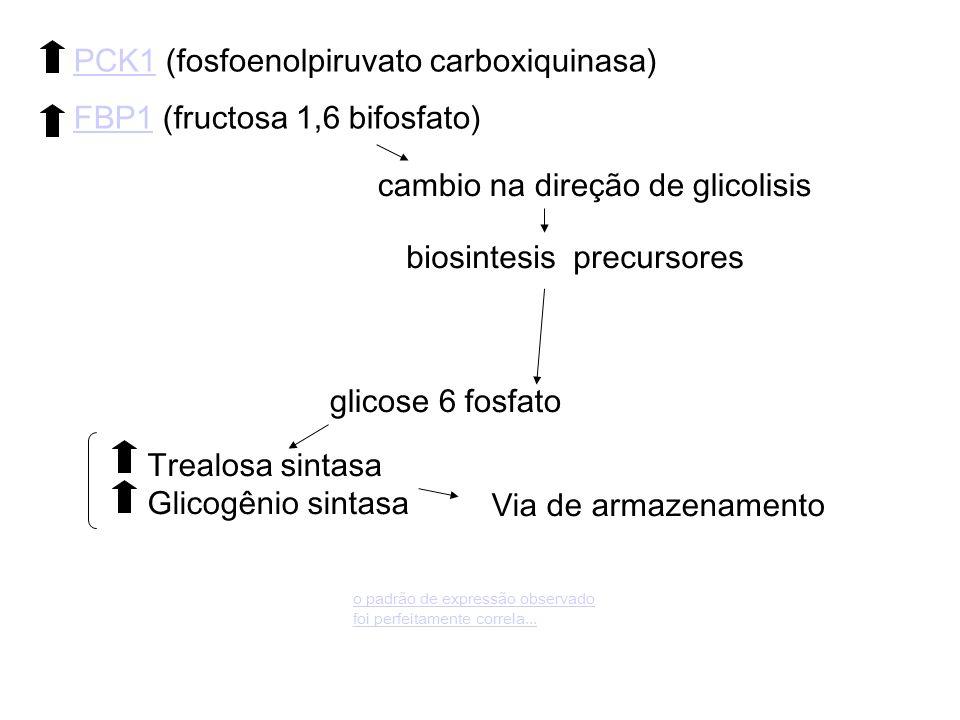 Trealosa sintasa Glicogênio sintasa Via de armazenamento cambio na direção de glicolisis PCK1PCK1 (fosfoenolpiruvato carboxiquinasa) FBP1FBP1 (fructosa 1,6 bifosfato) biosintesis precursores glicose 6 fosfato o padrão de expressão observado foi perfeitamente correla...
