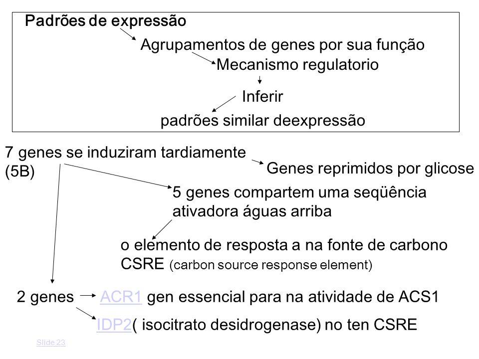Padrões de expressão Agrupamentos de genes por sua função Mecanismo regulatorio Inferir padrões similar deexpressão 7 genes se induziram tardiamente (5B) o elemento de resposta a na fonte de carbono CSRE (carbon source response element) 5 genes compartem uma seqüência ativadora águas arriba 2 genes ACR1 gen essencial para na atividade de ACS1ACR1 Genes reprimidos por glicose IDP2IDP2( isocitrato desidrogenase) no ten CSRE Slide 23