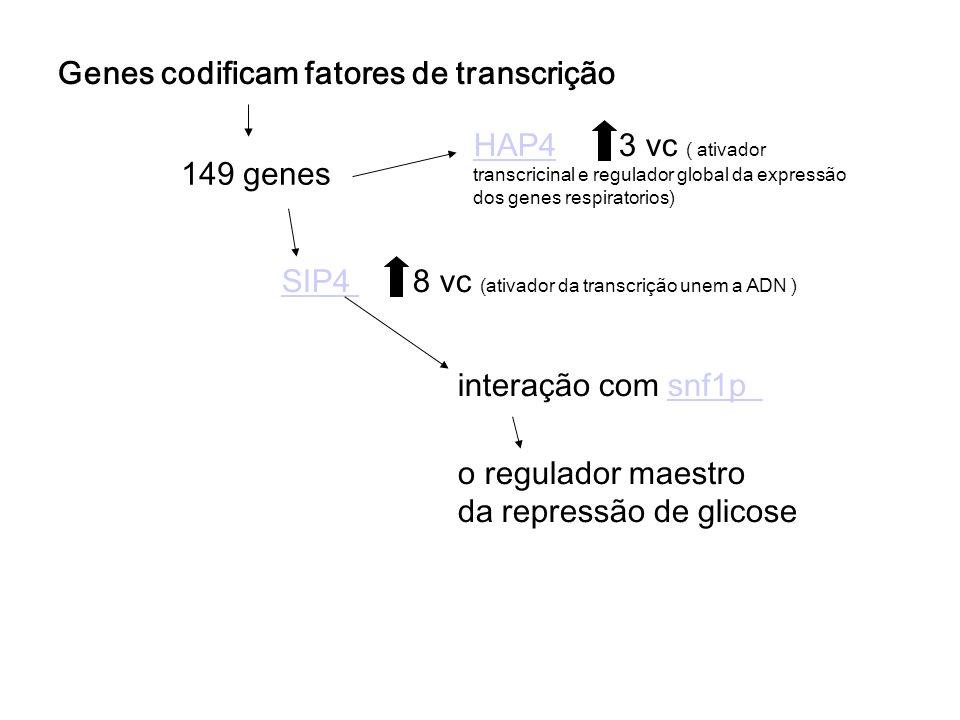 Genes codificam fatores de transcrição 149 genes HAP4HAP4 3 vc ( ativador transcricinal e regulador global da expressão dos genes respiratorios) SIP4 SIP4 8 vc (ativador da transcrição unem a ADN ) interação com snf1psnf1p o regulador maestro da repressão de glicose