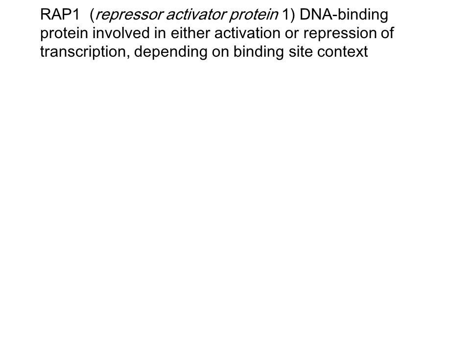 RAP1 (repressor activator protein 1) DNA-binding protein involved in either activation or repression of transcription, depending on binding site conte