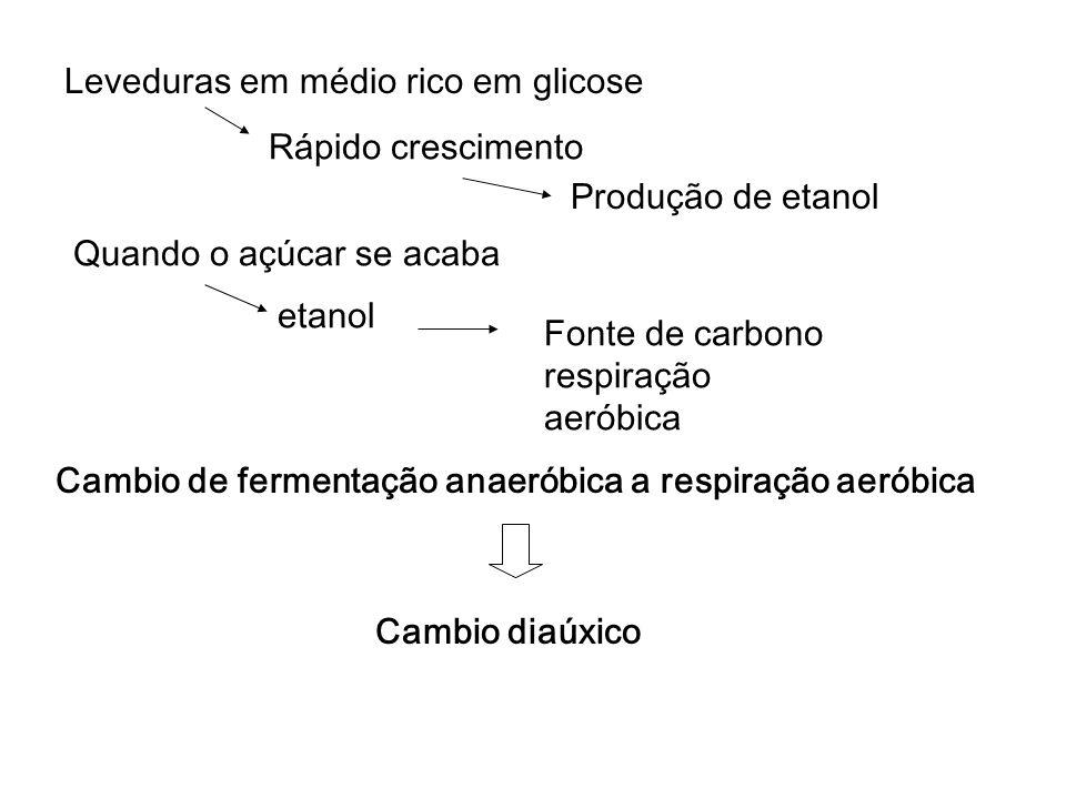 Produção de etanol etanol Cambio de fermentação anaeróbica a respiração aeróbica Cambio diaúxico Fonte de carbono respiração aeróbica Quando o açúcar se acaba Leveduras em médio rico em glicose Rápido crescimento