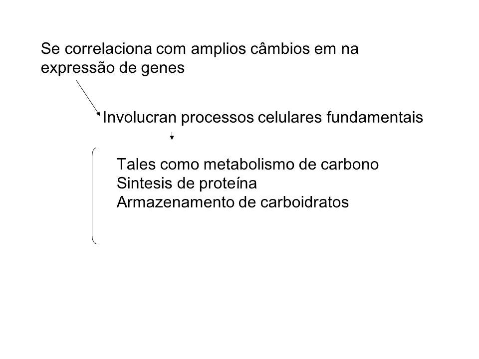 Se correlaciona com amplios câmbios em na expressão de genes Tales como metabolismo de carbono Sintesis de proteína Armazenamento de carboidratos Involucran processos celulares fundamentais