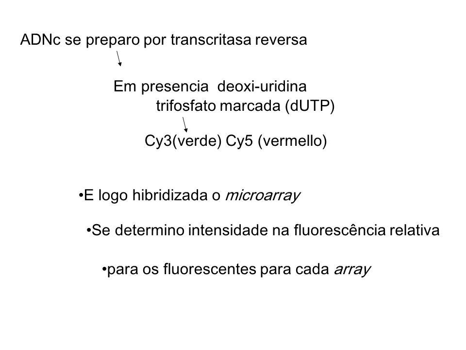 ADNc se preparo por transcritasa reversa Em presencia deoxi-uridina Cy3(verde) Cy5 (vermello) E logo hibridizada o microarray trifosfato marcada (dUTP) Se determino intensidade na fluorescência relativa para os fluorescentes para cada array