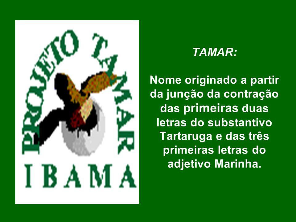 TAMAR: Nome originado a partir da junção da contração das primeiras duas letras do substantivo Tartaruga e das três primeiras letras do adjetivo Marin
