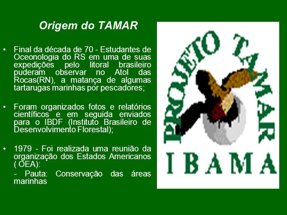 Origem do TAMAR Final da década de 70 - Estudantes de Oceonologia do RS em uma de suas expedições pelo litoral brasileiro puderam observar no Atol das