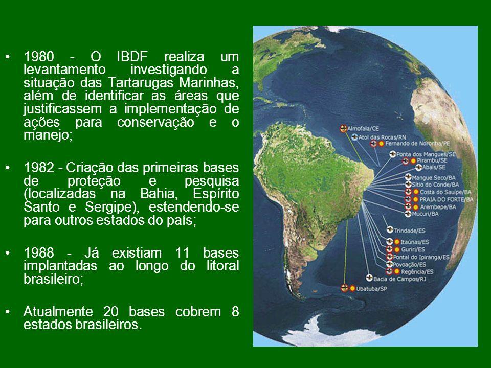 PROJETO TAMAR Tem 25 anos de atuação no Brasil e desde sua criação em janeiro de 1980, desenvolve continuamente atividades de pesquisa, proteção e manejo, visando aprimorar técnicas que possam contribuir para preservação das cinco espécies que ocorrem no Brasil, todas ameaçadas de extinção.
