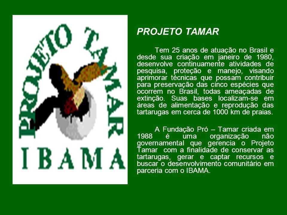 PROJETO TAMAR Tem 25 anos de atuação no Brasil e desde sua criação em janeiro de 1980, desenvolve continuamente atividades de pesquisa, proteção e man