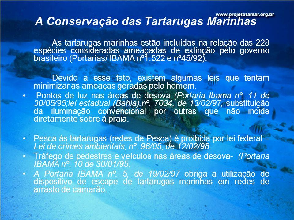 A Conservação das Tartarugas Marinhas As tartarugas marinhas estão incluídas na relação das 228 espécies consideradas ameaçadas de extinção pelo gover