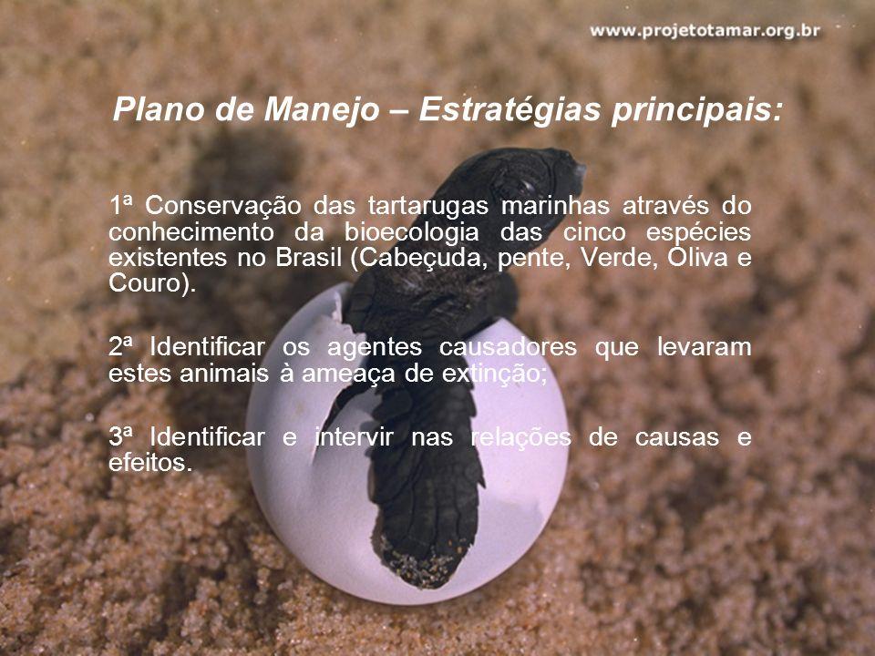 Plano de Manejo – Estratégias principais: 1ª Conservação das tartarugas marinhas através do conhecimento da bioecologia das cinco espécies existentes