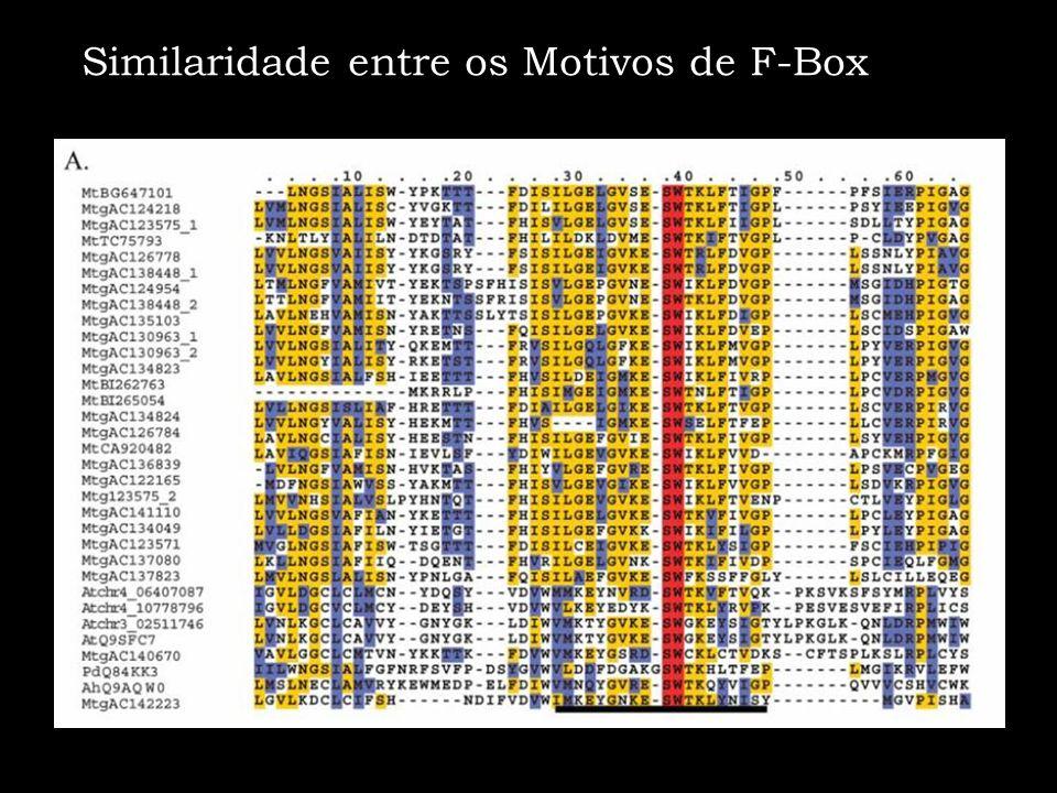 Similaridade entre os Motivos de F-Box