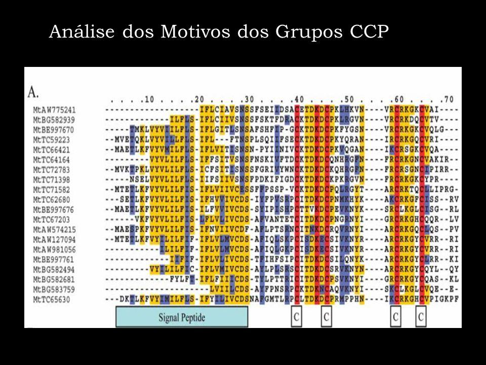 Análise dos Motivos dos Grupos CCP