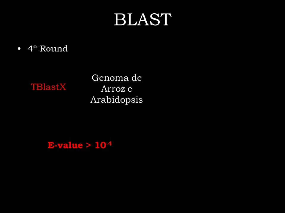 BLAST 4º Round TBlastX E-value > 10 -4 Genoma de Arroz e Arabidopsis